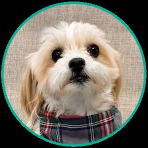 Hamilton the Office dog
